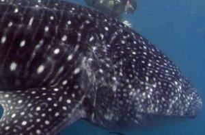 Gezegenimizde tespit edilmiş bir milyon 200 bin canlı türü mevcut