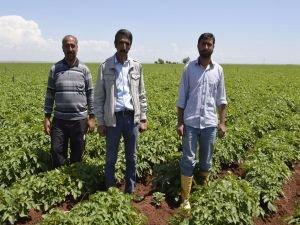 Bölge çiftçisi sıkıntılı
