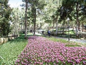 Dülük Tabiat Parkı'nda lale ziyafeti