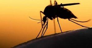 Uzmanlar Zika virüsü uyarısında bulundular
