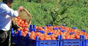 Rusya'dan Türkiye'de ithal edilen gıdalara yasaklama