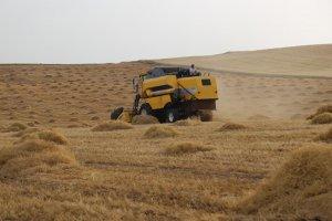 Çiftçiler mercimek hasadından memnun