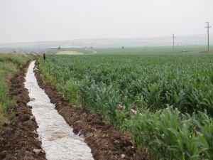 Çiftçiler mısıra yöneldi