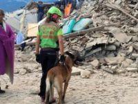 İtalya'daki depremde ölü sayısı 290'a yükseldi
