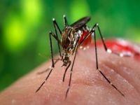 Boğaziçi Üniversitesi Zika Virüsü araştırması başlattı