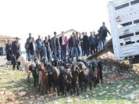Gaziantep'te çiftçilere keçi dağıtımı