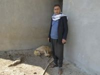 Tarlaya atılan ilaç çoban köpeklerini zehirledi