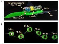 Çinli Bilimadamları Yumuşak Robotik Balık yaptılar