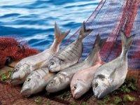 Hayvansal Ürünlerin İhracatına Bodrum'dan 500 Milyon dolarlık katkı