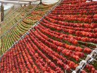 Gaziantep'te kurutmalık sezonu başladı