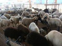 Çiftçi: Türkiye'de hayvancılık sektörü dengesiz işliyor