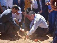 Derik'te 10 kapama zeytin bahçesinin açılışı yapıldı