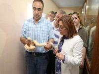 Samsun'da el konulan yılanlar Gaziantep'e getirildi