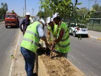 Kentin Yeşillendirilmesinde, Yapım Ve Bakım İşleri Bir Arada