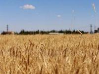 İTTİHADUL ULEMA Fetva Kurulu'ndan ekinlerin zekatıyla ilgili 14 önemli mesele