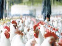 Beyaz et sektöründeki 19 şirkete soruşturma