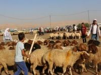 Şanlıurfa hayvan pazarlarında hareketlilik başladı