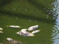 Binlerce balığın telef olduğu gölettin bulunduğu köy sakinlerinden DSİ'ye çağrı