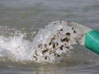 Göksu Barajı'na 200 bin balık yavrusu bırakıldı