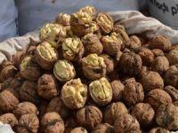 Bitlis'te üreticiler ceviz hasadından memnun