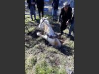 Çukura düşen at itfaiye tarafından kurtarıldı