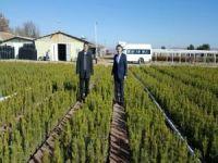 Belediye mezarlıklara 10 bin fidan dikecek