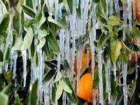 Meteorolojiden çiftçilere zirai don uyarısı
