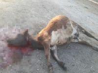 Hayvan ölümlerinin sebebi belirlendi