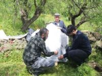 Feqiyê Teyran'a ait olduğu düşünülen mezar taşı bulundu