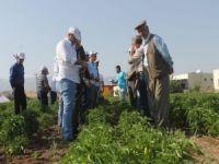 Silopi'de sebze yetiştiriciliği yaygınlaştırılıyor