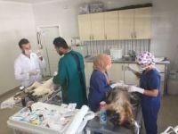 Belediyeden sokak hayvanlarına kısırlaştırma ve aşı operasyonu