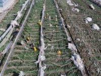 TZOB: Doğal afetler çiftçinin peşini bırakmıyor