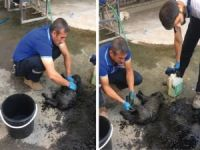 Petrol çukuruna düşen yavru köpekler kurtarıldı