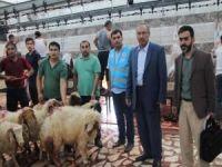 Diyanet Vakfından Kızıltepe'de kurban kesimi