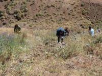 Bingöl'de ekonomik değeri olan bitkiler belirleniyor