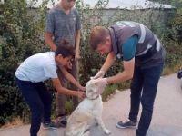 Çocuklar sakat köpeğe sahip çıktı