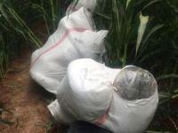 Şanlıurfa'da 172 kilo kubar esrar ele geçirildi