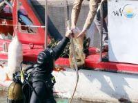 Van Gölü'nde dalgıçlarla temizlik yapılıyor