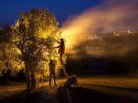 """""""Zeytin Diyarı Altınözü"""" fotoğraf yarışması sonuçlandı"""