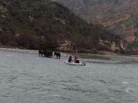 Botan Çayı'nda mahsur kalan atlar kurtarıldı