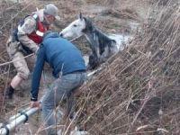 İki gündür çamura saplı kalan at kurtarıldı