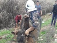 Çamura saplanan inek kurtarıldı