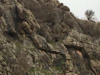 Uçurumda mahsur kalan keçiler kurtarıldı
