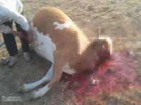 Hayvan ölümlerine ilişkin habere Valilikten açıklama