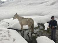Karda mahsur kalan at kurtarıldı