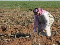 Mardinli çiftçiler: Perişan haldeyiz