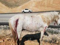 Atların ateşli silahla vurulması tepkiye neden oldu