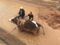 İnek saplandığı çamurdan 5 saat sonra kurtarıldı