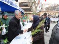 Gaziantep'te 150 bin ücretsiz çam fidanı dağıtıldı