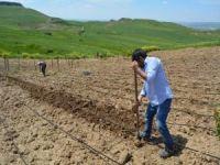 7 ilde çiftçiye hazineden ücretsiz arazi verilecek